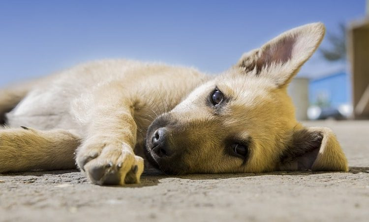 kölyök kutyatáp